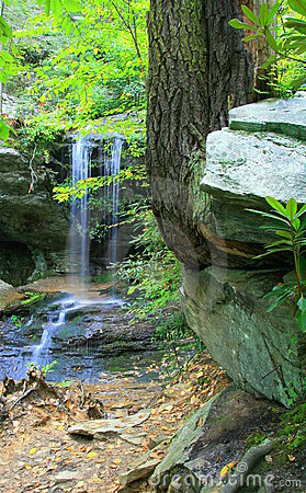 Free Falls And Right Angle Tree Royalty Free Stock Photography - 11635887
