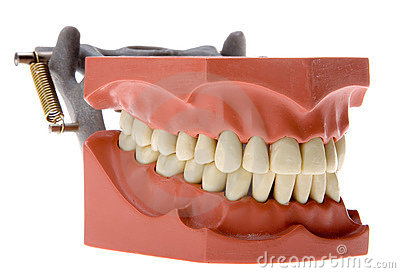 False teeth