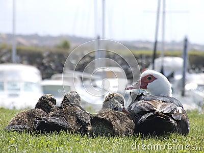 Familie die van eend aan kijkt