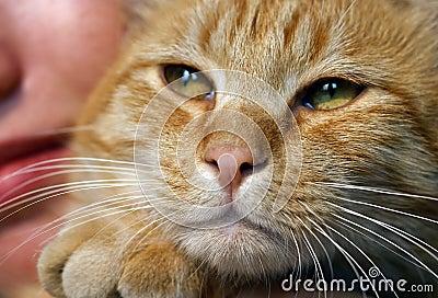Familien-Katze