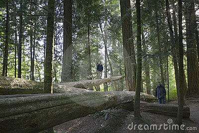 Family balancing on fallen trees