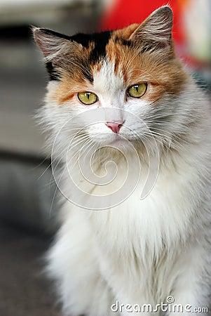 Free Family Cat Royalty Free Stock Image - 20979856