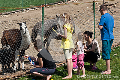 Family feeding animals in farm