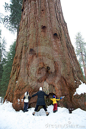 Family hugging a giant sequoia tree