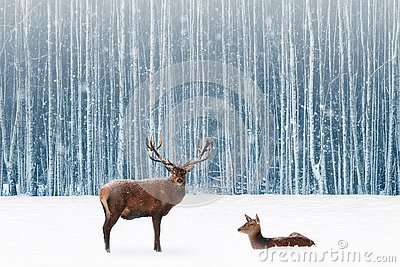 Family of noble deer in a snowy winter forest. Christmas fantasy image in blue and white color. Snowing Stock Photo