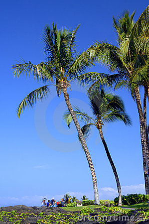 Family Picnic under Palm Fronds