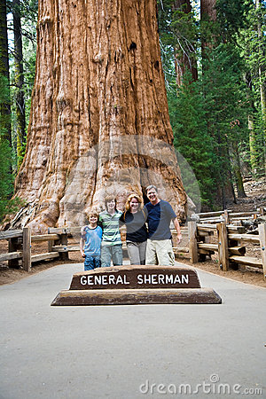 Family is posing in Sequoia
