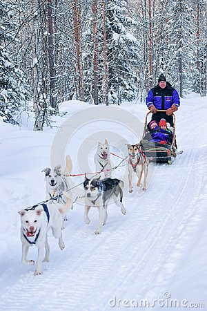 Free Family Riding Husky Sledge At Lapland In Winter Finnish Forest Royalty Free Stock Photography - 106206997