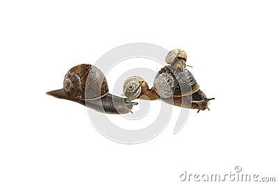 Family of snails.