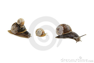 Family of snails.