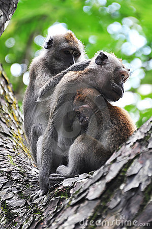 Free Family Time For A Monkey Family Stock Images - 14319334