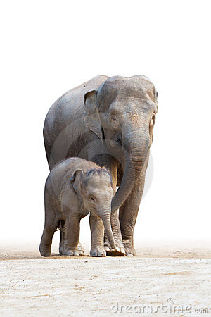 Familys 2 que recorren del elefante asiático
