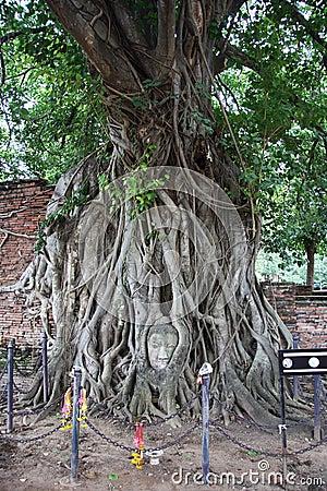 Famous Buddha s head