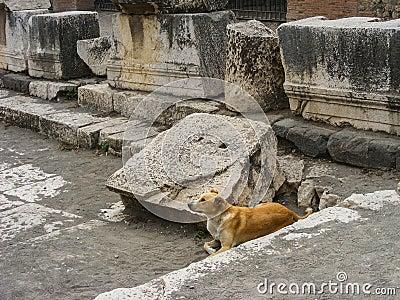 Famous Feral Pompeii Dog