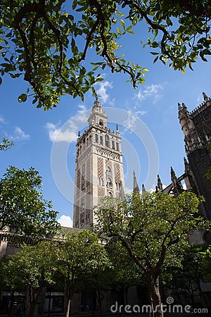 Tree framed Giralda