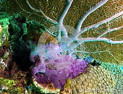 Fan Coral Base