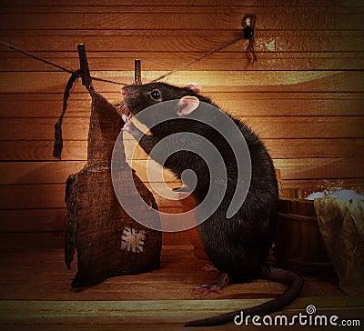 Free Fancy Rat Stock Images - 103170354