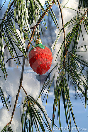Fancy red strawberry xmas ornament in a pine tree