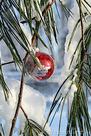 Fancy red xmas ball in a pine tree