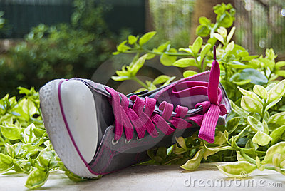 Fancy sneaker with the pink laces in green grass