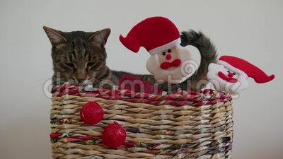 Fanny Sleepy Cat In A Christmas Box With Santa Claus Toys The