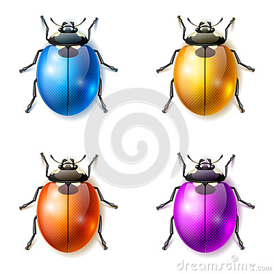 Fantastic beetles