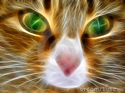 Fantastic cat