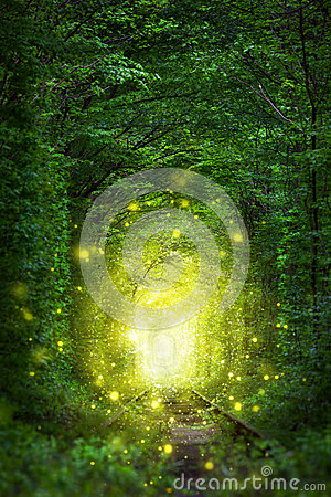 Free Fantastic Trees Scene - Tunnel Of Love With Fairy Light Royalty Free Stock Photography - 75402347