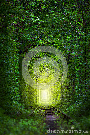 Free Fantastic Trees - Tunnel Of Love With Fairy Light Royalty Free Stock Photo - 71032475