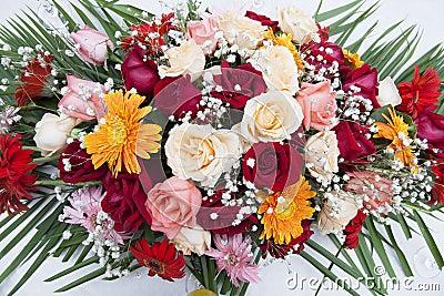 Fantastische Gänseblümchen-und Rosen-Bildschirmanzeige