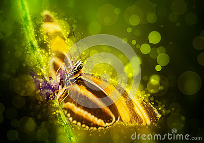 Fantasy butterfly Stock Photo