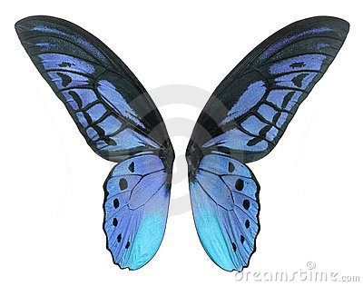 Fantasy butterfly wings - photo#41
