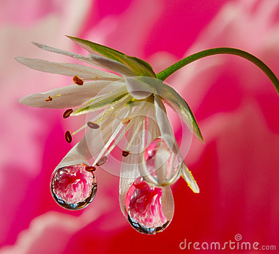 Free Fantasy Drops And Flowers Royalty Free Stock Images - 83005649