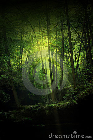 Free Fantasy Forest Stock Images - 5384564