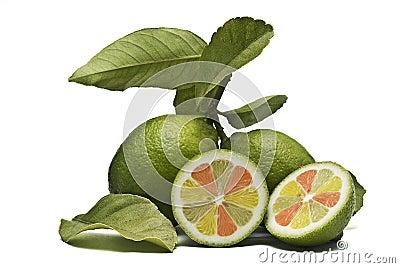 Fantasy lemons.