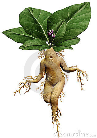 fantasy mandrake plant royalty free stock photos image. Black Bedroom Furniture Sets. Home Design Ideas