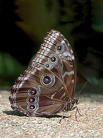 Farfalla sulla pietra