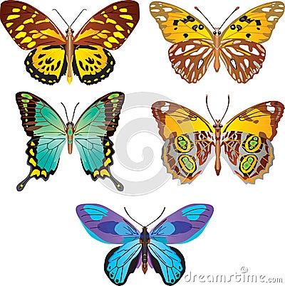 Farfalla variopinta. Vettore