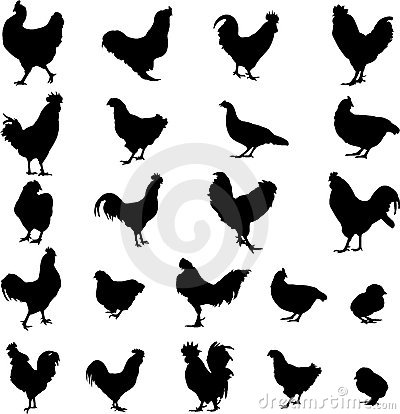 Free Farm Animal Cock, Hen And Chick Royalty Free Stock Photo - 13678685