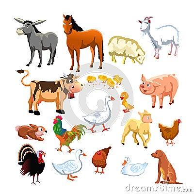Farm on Farm Animals Stock Photos   Image  11539053