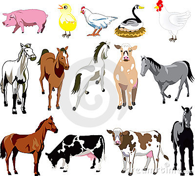 Free Farm Animals Royalty Free Stock Photos - 12270068