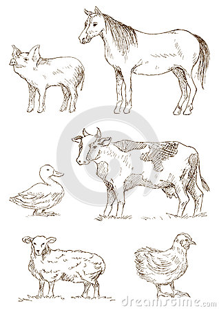 Free Farm Animals Royalty Free Stock Photos - 46411398