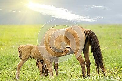 Farm animals horse coal