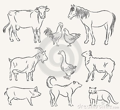 Rates ansteads deer processing in addition British Cuts Beef Pork Lamb Rabbit 334230815 likewise Stock Illustration Farm Animals Set Vector Sketches White Background Image41498261 further Stock Illustration Farm Animals Set Vector Sketches White Background Image41498261 also Pork Vectors. on different cuts of pork