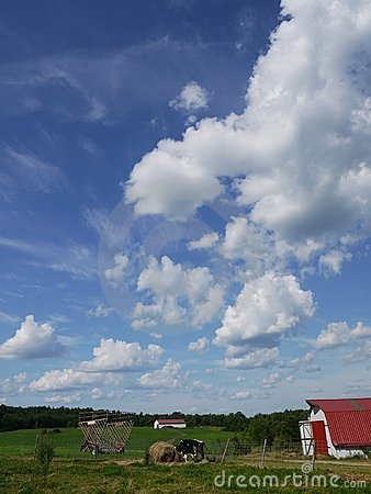 Farm: big sky barn and cow