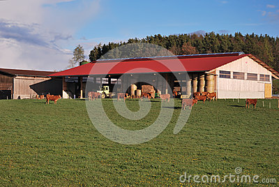 Farm with cows