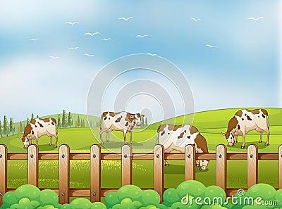 A farm with cows