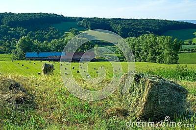 Farm in czech republic 1