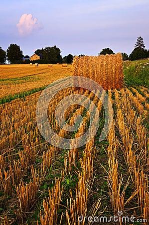 Free Farm Field At Dusk Royalty Free Stock Photography - 13050027