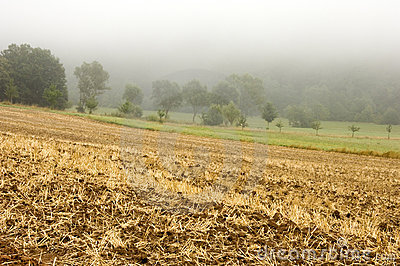 Farm Field in Mist